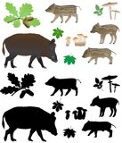 Wild pig with cubs Stock Photo