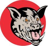 Wild pig razorback Stock Image