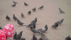 Wild pigeon eats seed from kid`s hand on city square. Up view in slow motion. Wild pigeon eats seed from kid`s hand on city square stock video footage
