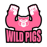 Wild pigs logo for sports team. Angry pig. Aggressive big boar. Royalty Free Stock Images
