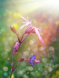 Wild pink flower Stock Images
