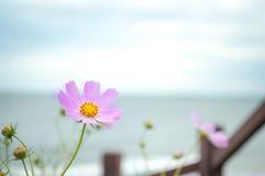 Wild pink flower Royalty Free Stock Image