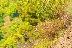 Wild pink flower Royalty Free Stock Photos