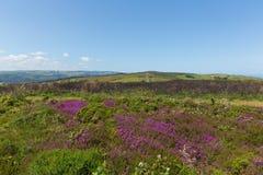 Wild pink flowers North Hill Somerset countryside scene near Minehead UK Royalty Free Stock Photo