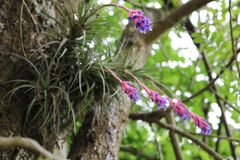Wild pink and lilac flower rooted in tree trunk stock photos