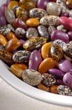Wild Pinto Beans Stock Photo