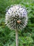 Wild_plant Royaltyfri Fotografi