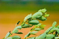 Wild plant. Wild green plant in sunny day stock photo
