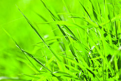 Wild plant. Wild green plant in sunny day royalty free stock photos