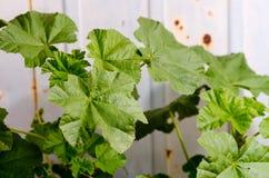 Wild plant Stock Image