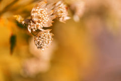 Wild plant flower close up on orange Royalty Free Stock Photography