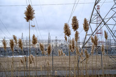 Wild plant in front of a power plant. Wild plant in front of a electrical power plant Stock Photography
