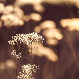 Wild plant grown in an autumn field in sun rays. Stock Images