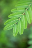 Wild plant leaf Royalty Free Stock Image