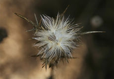 Wild plant Royalty Free Stock Images