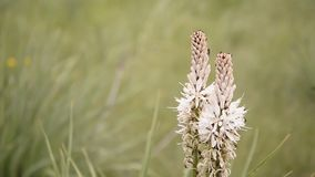 Wild plant on a wind Royalty Free Stock Photo