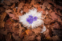 Wild plants Royalty Free Stock Images
