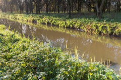 Wild plants at the banks of a narrow stream. Backlit image of wild plants and bare trees reflected in the mirror-like water surface of a small stream. It's early stock photos