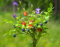 Wild plants bouquet, blueberry and wild strawberry royalty free stock photo