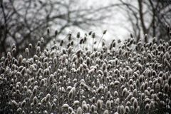 Wild plants covered by fresh snow after winter storm. In Michigan Royalty Free Stock Images