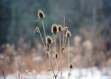 Wild plants covered by fresh snow after winter storm. In Michigan Royalty Free Stock Photography