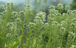 Wild plants. Wild flowering plants with sky background Stock Photo