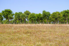 Wild plants, flowers and Cork tree in Porto Covo. Alentejo, Portugal Royalty Free Stock Photography