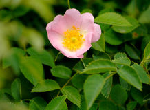 Wild plants flowers Royalty Free Stock Image
