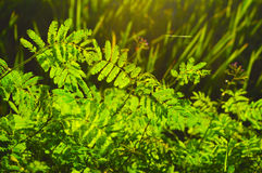 Wild Plants. The wild plants within the forest Royalty Free Stock Photo