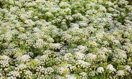 Wild plants Stock Images