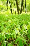 Wild plants Stock Image