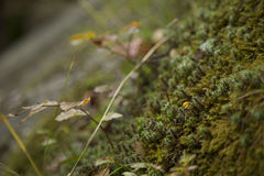 Wild plants. That grow in the forest Stock Images