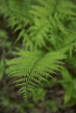 Wild plants. That grow in the forest Stock Photography