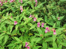 Wild plants Royalty Free Stock Photos