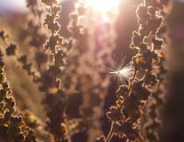 Wild plants in a meadow Stock Photography