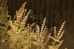 Wild plants on a meadow Royalty Free Stock Photo