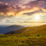 Wild plants at the mountain top at sunset Royalty Free Stock Photo