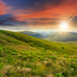 Wild plants at the mountain top at sunset Stock Images