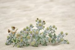 Wild plants in the sand stock photography