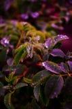 Wild plants Royalty Free Stock Image
