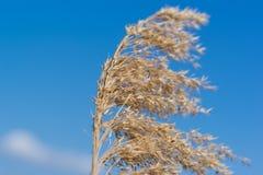 Wild plants on sky background Stock Image