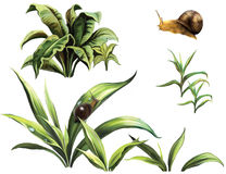 Wild plants and snails. Isolated realistic illustration on white background Royalty Free Stock Photos