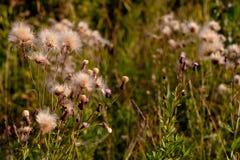 Wild plants Stock Photos