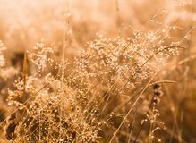 Wild plants in a sunrise light covered by a morning dew. Royalty Free Stock Photos