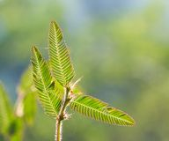 Wild plants Royalty Free Stock Photography