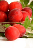 Wild plums Stock Photography