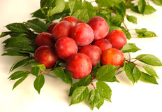 Wild plums Royalty Free Stock Photography