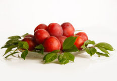 Wild plums Royalty Free Stock Image