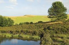 Wild pond Stock Image