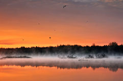 Wild pond covered in low mist Stock Image